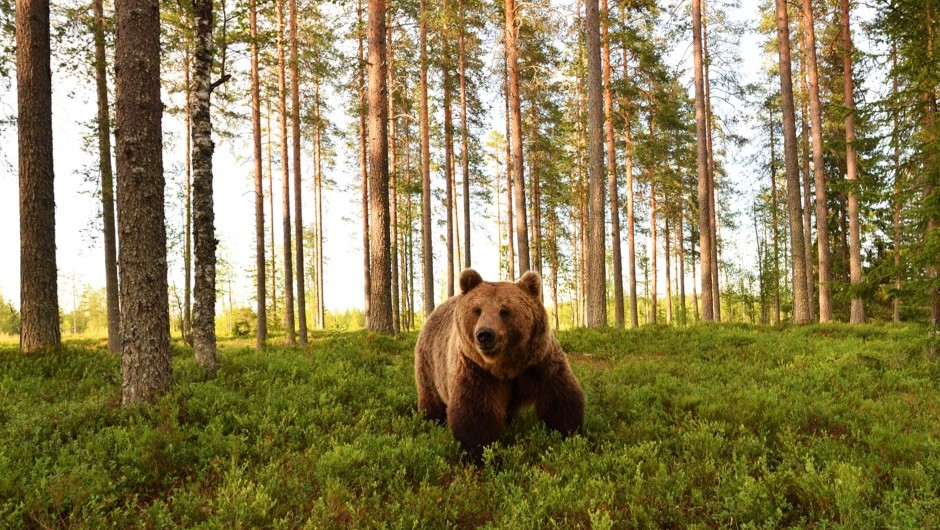 How can I survive a bear attack? © Getty