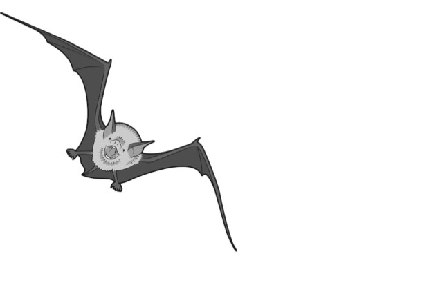 Kitti's hog-nosed bat