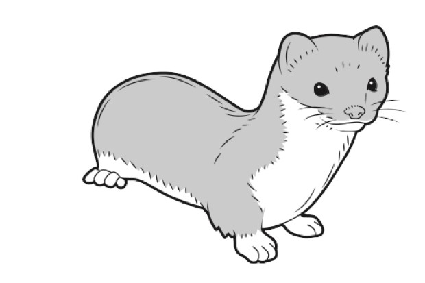 Least weasel (smallest carnivore)