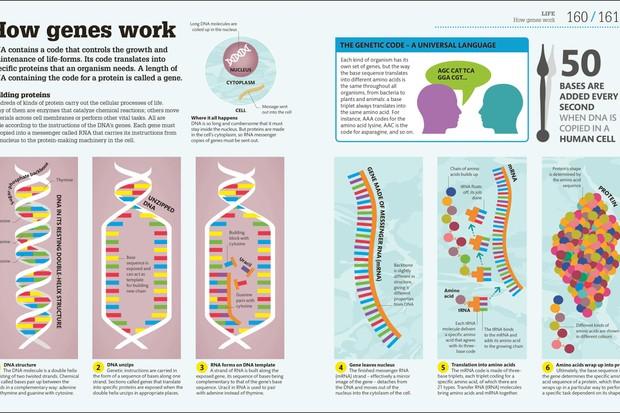 How Science Works DK, £16.99