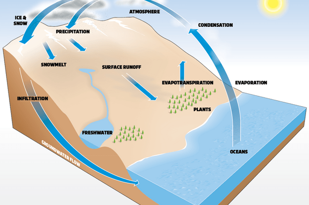 Molecules of water evaporate from oceans, lakes and plants. The water then condenses in the atmosphere, forming clouds, before falling as precipitation. Eventually, this water finds its way back into the oceans, either as surface runoff or groundwater.