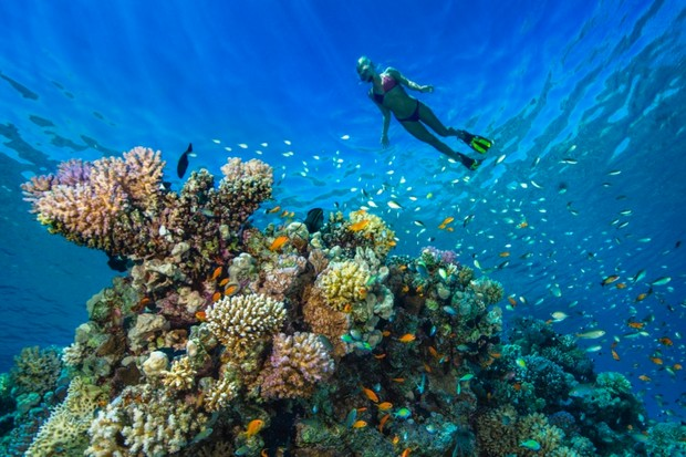 How do corals eat? © Getty Images