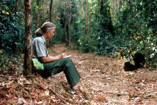 Jane Goodall © Penelope Breese/Liaison/Getty Images