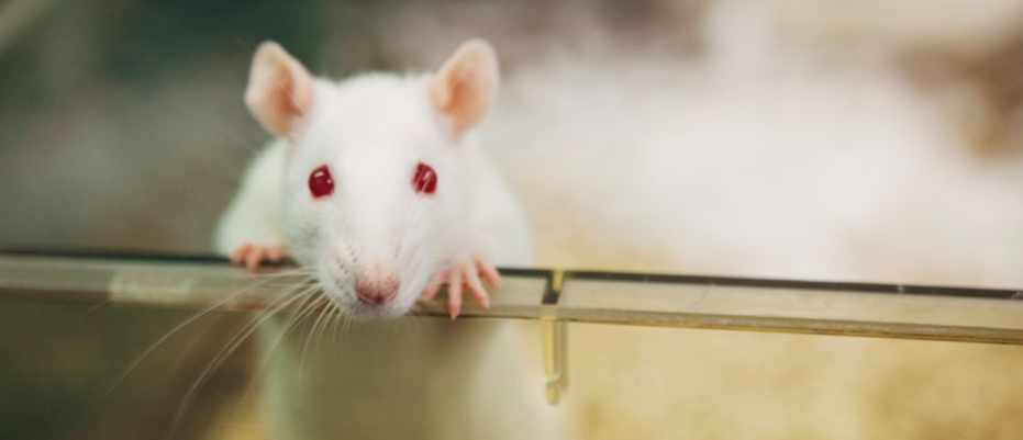 Can we end animal testing? © Getty Images