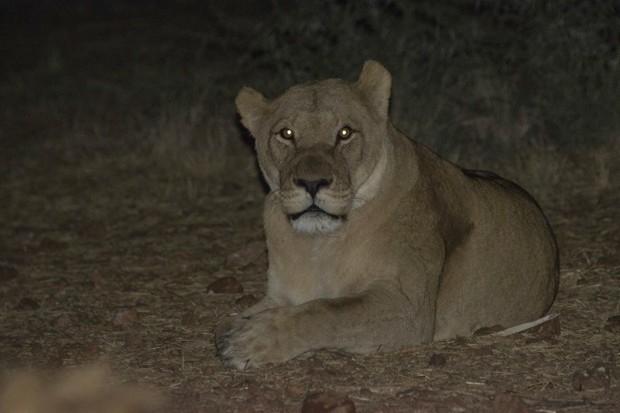 Lioness © Valentin Wolf/Getty Images