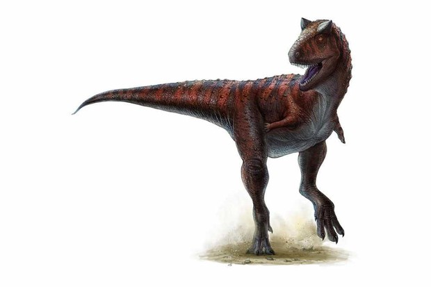 Carnotaurus by Lida Xing and Yi Liu - Persons WS IV, Currie PJ (2011) Dinosaur Speed Demon: The Caudal Musculature of Carnotaurus sastrei and Implications for the Evolution of South American Abelisaurids. PLoS ONE 6(10): e25763. doi:10.1371/journal.pone.0025763, CC BY 2.5, Link