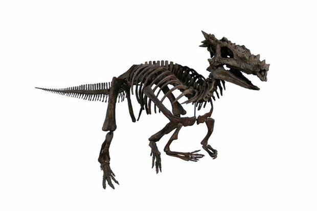 Dracorex by The Children's Museum of Indianapolis, CC BY-SA 3.0, Link