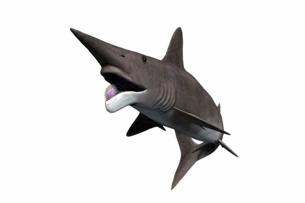 Helicoprion by Nobu Tamura - Own work, CC BY-SA 4.0, Link