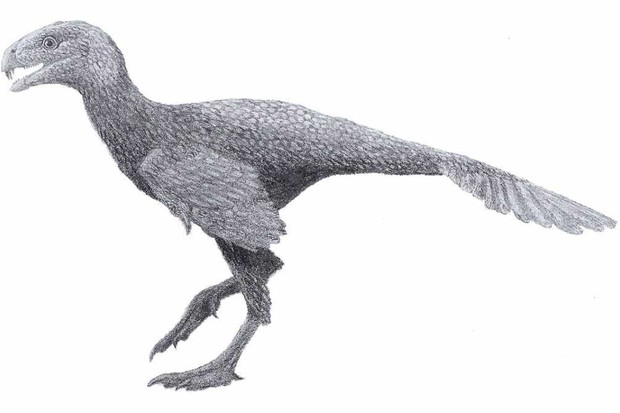 Incisivosaurus by Tomopteryx - Own work, CC BY-SA 3.0, Link