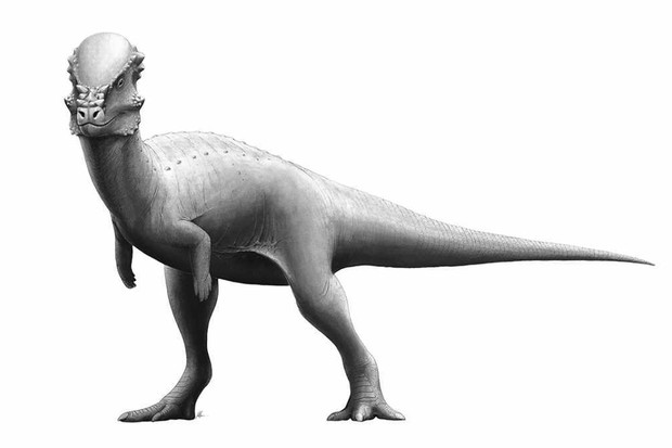 Pachycephalosaurus by Fred Wierum - Own work, CC BY 4.0, Link