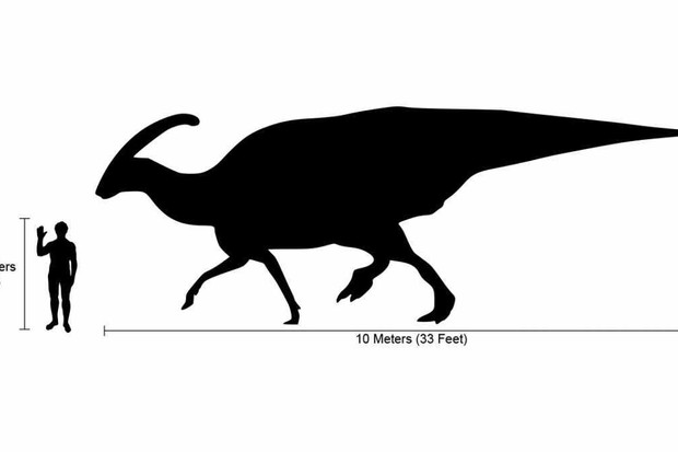 Parasaurolophus By Marmelad - Based on Image:Human-parasaurolophus size comparison2.png, CC BY-SA 2.5, Link