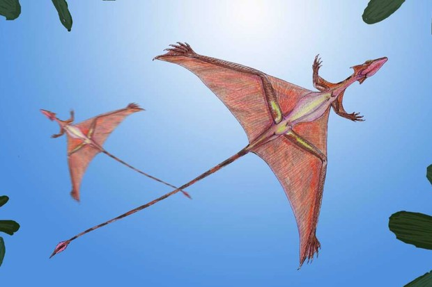 Sharovipteryx by dmitrchel, CC BY 3.0, Link