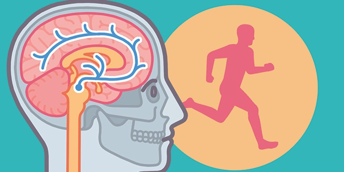 What happens to my body when I exercise?