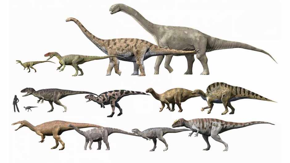 Why were dinosaurs so big? © Getty Images