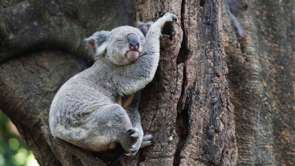 Top 10: Which animals sleep the most?