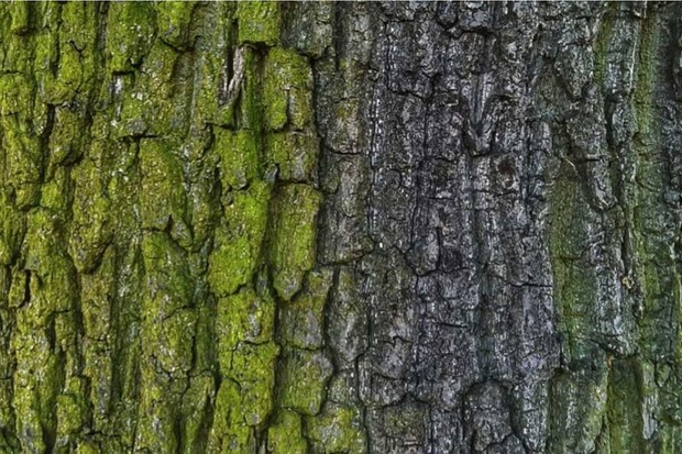 Why do some trees have smooth bark and others rough? © Getty Images