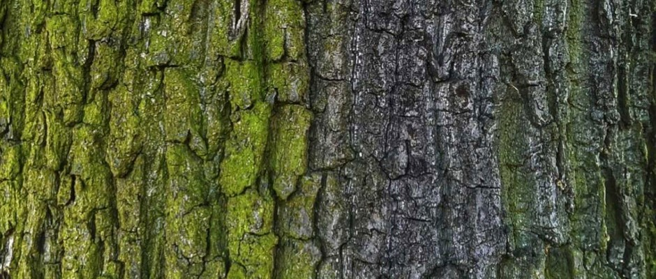 Why Do Some Trees Have Smooth Bark And Others Rough Bbc Science