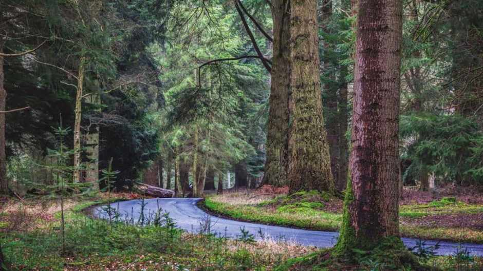 Do trees reduce air pollution levels? © Getty Images