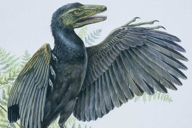 Why were birds the only dinosaurs to survive the mass extinction? © Getty Images