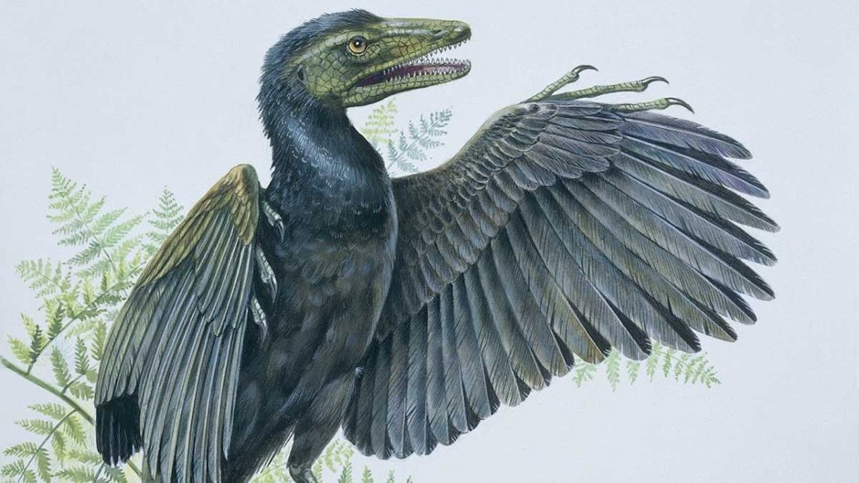 Why were birds the only dinosaurs to survive the mass extinction?