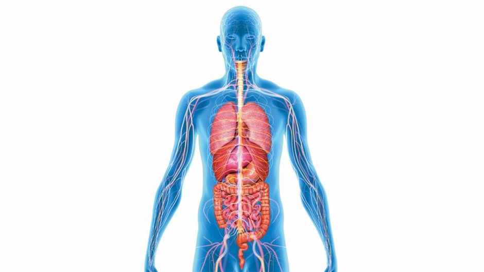 how many organs in the body could you live without? � getty images