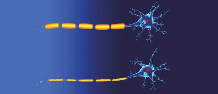 Can the body self-repair nerve damage?