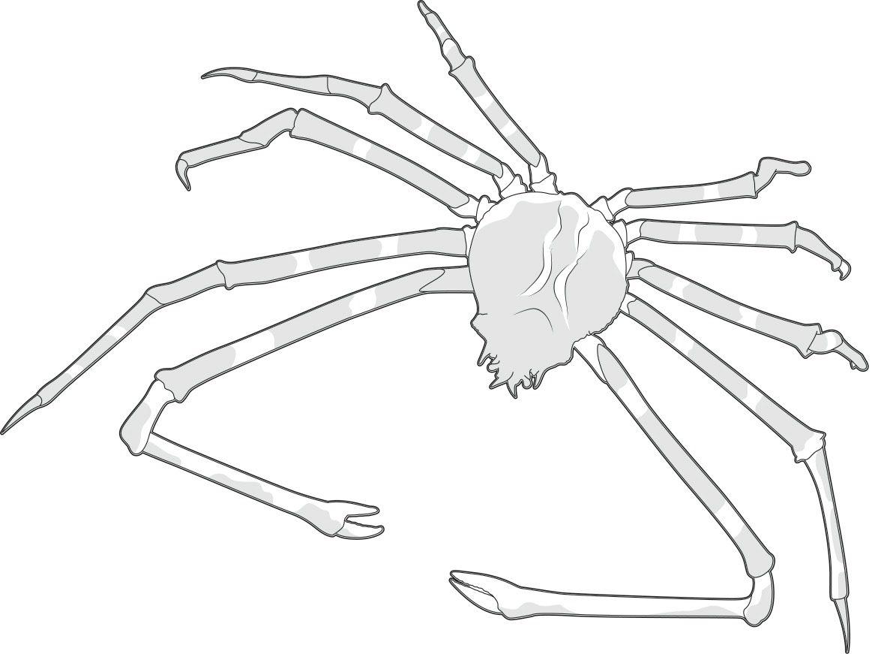 top 10 what are the biggest crustaceans science focus bbc Atlantic Ocean japanese spider crab