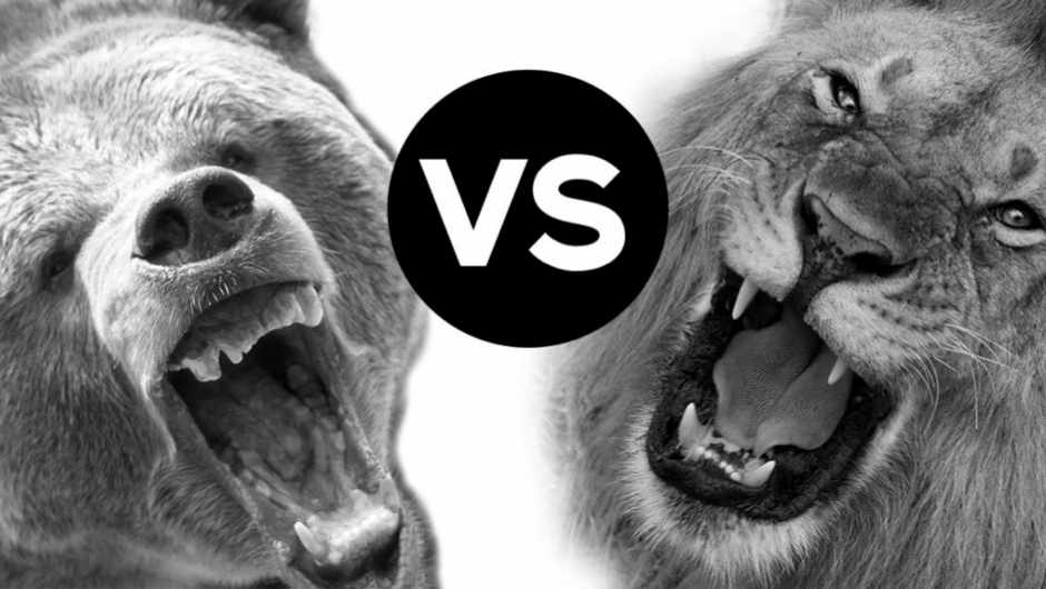 Head to head: Grizzly bear vs African lion