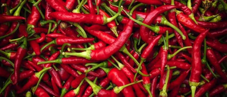 Why does spicy food taste hot?