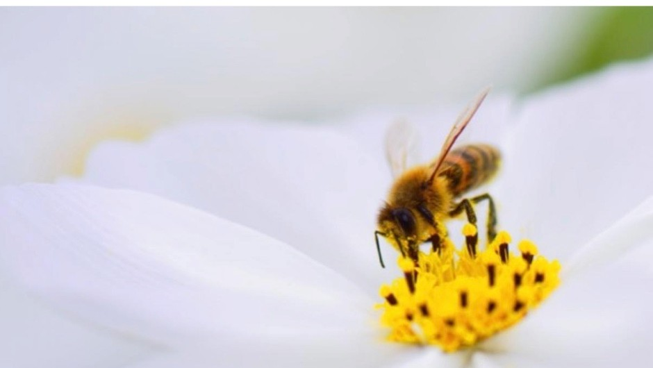 Do bees have knees and, if so, what's so special about them?