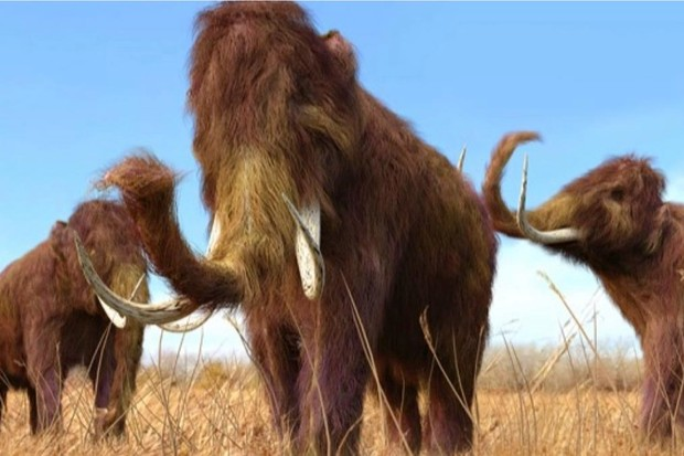 What did the woolly mammoth eat? © iStock