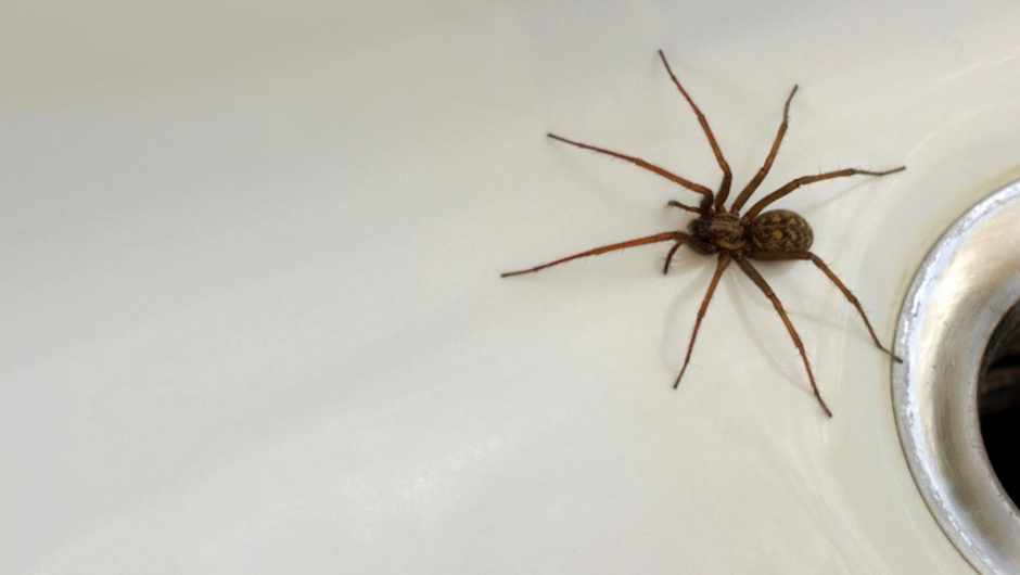 Why do spiders sometimes stay still for a long time? © iStock