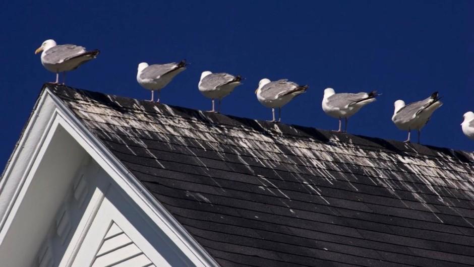 Do birds urinate? © iStock