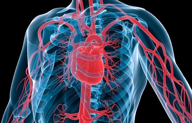 Heart © iStock