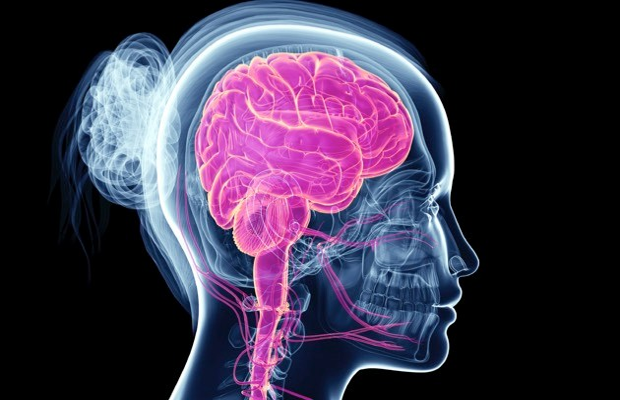 Brain © iStock