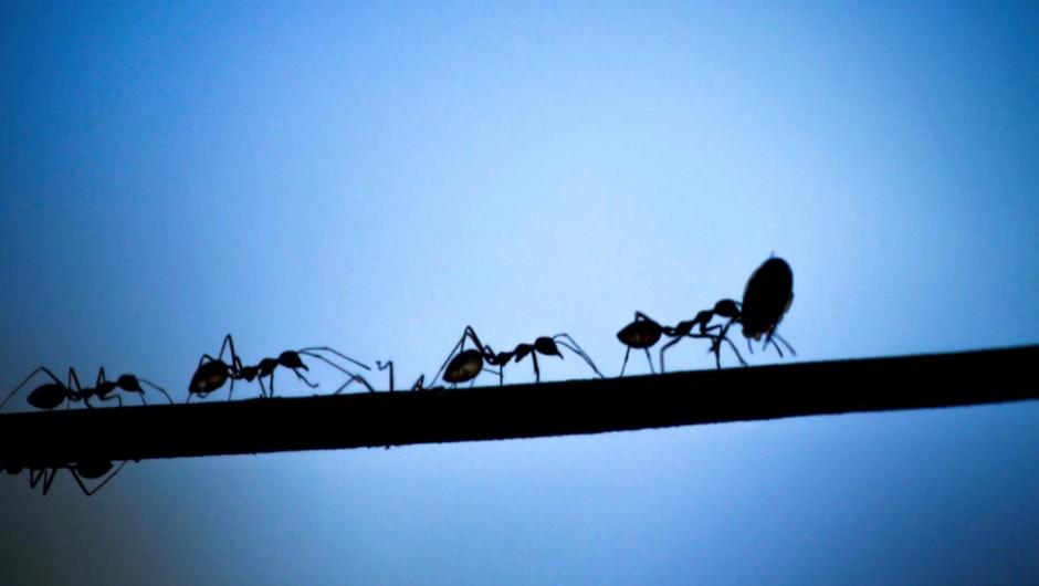 Do ants ever sleep? iStock