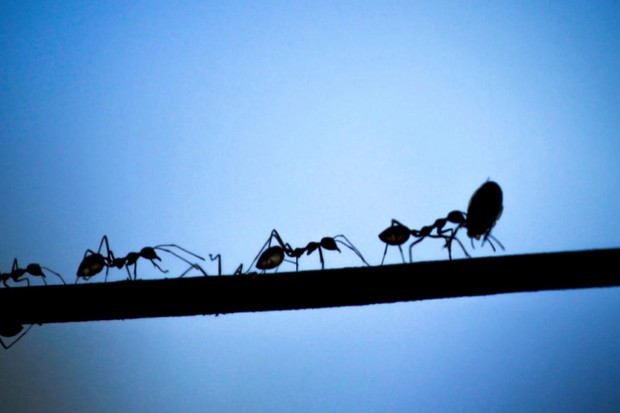 Do ants ever sleep? iStock