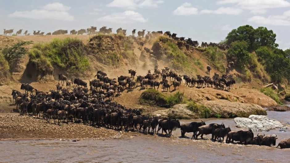 How do animals know where to migrate to? iStock
