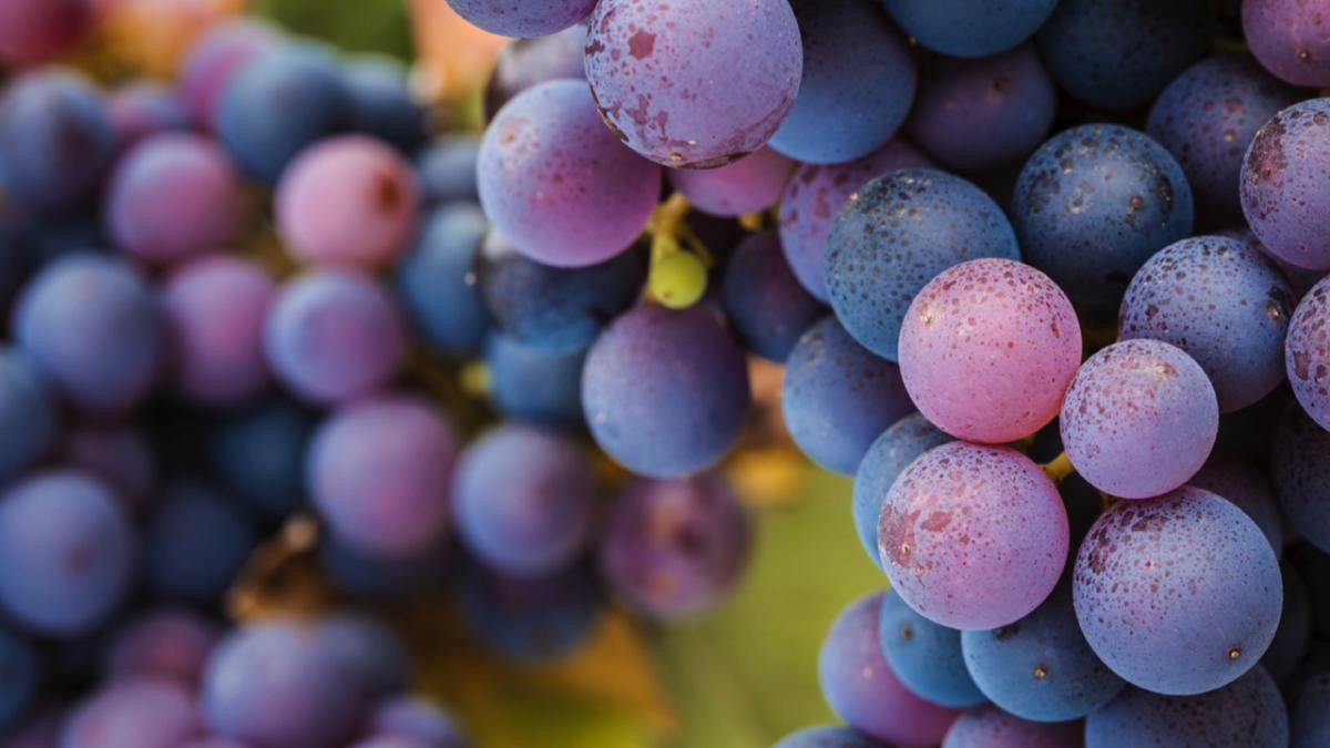 Where do seedless grapes come from? © iStock