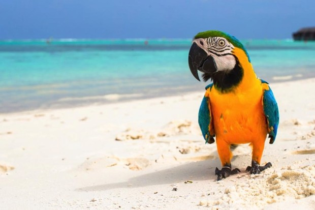 How long do parrots live? © iStock
