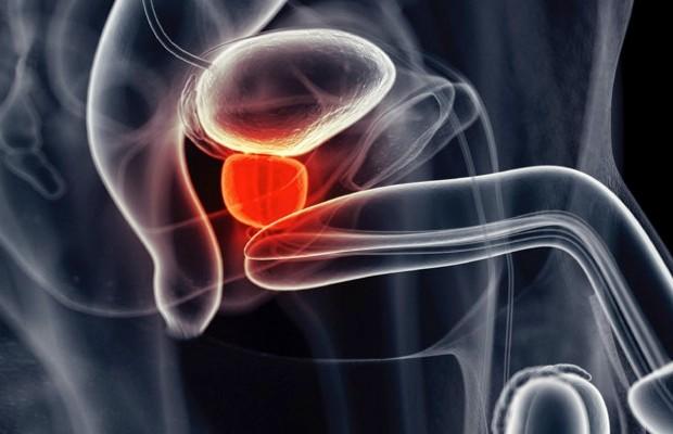 Prostate gland © iStock