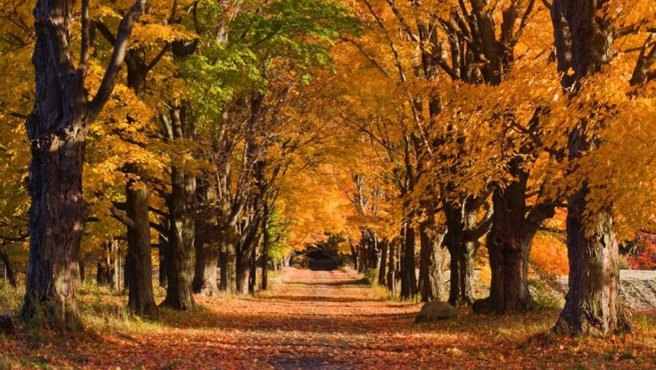 Why do trees lose their leaves? © iStock