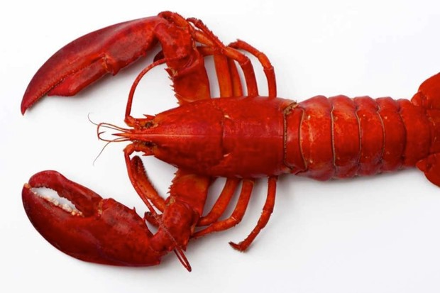 Why are lobsters cooked alive and do they feel pain? © iStock