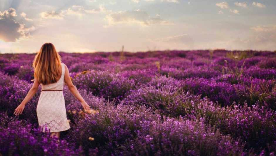 Why does the smell of lavender help you sleep? © Istock