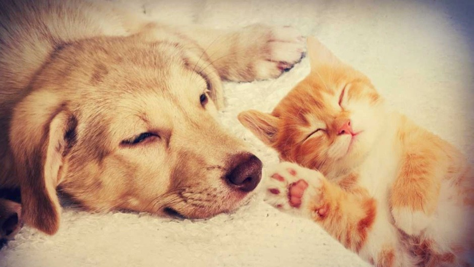 Which animals are more intelligent – dogs or cats? © iStock