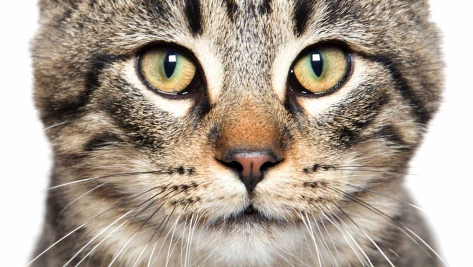 Why do cats and snakes have slits for pupils?
