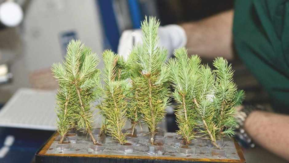 Can trees grow in space?