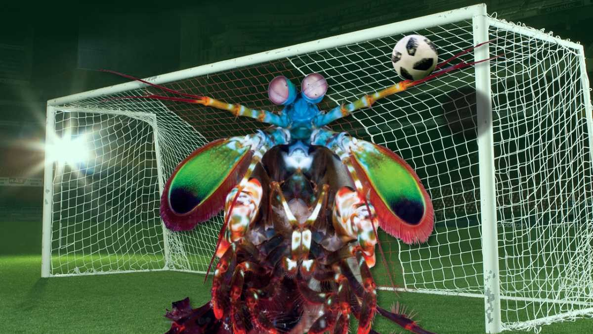 mantis-shrimp-goalie