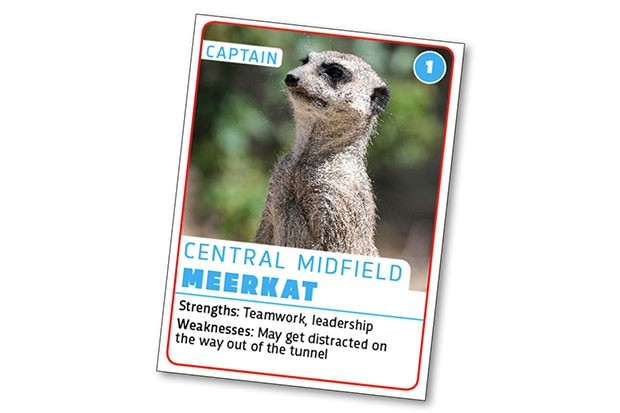 Meerkat © Getty Images
