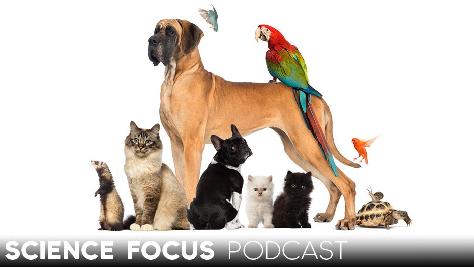 Science Focus Podcast: Why we love pets © Getty Images